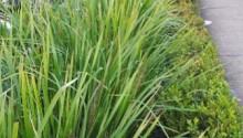 grass wide